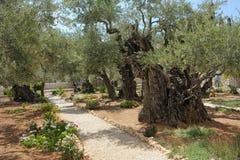 κήπος gethsemane Στοκ Εικόνες