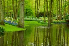 Κήπος Keukenhof άνοιξη Στοκ Εικόνες