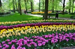 Κήπος Keukenhof, Κάτω Χώρες Στοκ Εικόνες