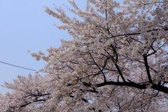 Κήπος Korae στοκ εικόνες με δικαίωμα ελεύθερης χρήσης