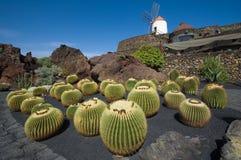 κήπος Lanzarote κάκτων Στοκ Φωτογραφίες