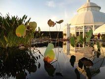 Κήπος Monets στοκ φωτογραφίες με δικαίωμα ελεύθερης χρήσης