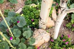 Κήπος patio Νέων Μεξικό Στοκ Φωτογραφίες