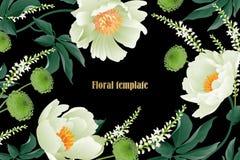 Κήπος peonies και asters στο μαύρο υπόβαθρο Floral σχέδιο πολυτέλειας καρτών διανυσματική απεικόνιση
