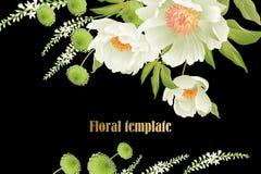 Κήπος peonies στο μαύρο υπόβαθρο floral απεικόνιση σχεδίου επαγγελματικών καρτών σας απεικόνιση αποθεμάτων