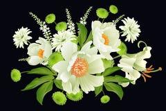 Κήπος peonies στο μαύρο υπόβαθρο Floral σχέδιο πολυτέλειας καρτών διανυσματική απεικόνιση