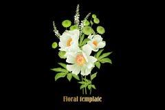 Κήπος peonies στο μαύρο υπόβαθρο Floral σχέδιο πολυτέλειας καρτών ελεύθερη απεικόνιση δικαιώματος