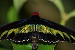 κήπος s νότια Ταϊλάνδη πεταλούδων Στοκ Εικόνα