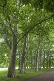 Κήπος tete δ ή Parc de Λα Tete δ ` ή στη Λυών, Γαλλία κήπος που ονομάζεται από το χρυσό κεφάλι για το tresor Πάρκο του χρυσού κεφ στοκ φωτογραφία με δικαίωμα ελεύθερης χρήσης