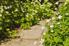 Κήπος Wildflower Στοκ φωτογραφία με δικαίωμα ελεύθερης χρήσης
