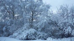 Κήπος Winther Στοκ Φωτογραφίες