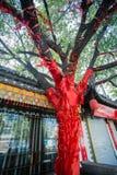 Κίνα ` s που ευλογεί το δέντρο Στοκ φωτογραφία με δικαίωμα ελεύθερης χρήσης