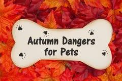 Κίνδυνοι φθινοπώρου για τα κατοικίδια ζώα στο ξύλινο κόκκαλο σκυλιών στα φύλλα πτώσης στοκ φωτογραφία με δικαίωμα ελεύθερης χρήσης