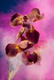 κίνηση έκρηξης χρώματος ζωη& Στοκ Εικόνες