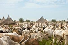 Κίνηση βοοειδών στο Νότιο Σουδάν Στοκ φωτογραφία με δικαίωμα ελεύθερης χρήσης