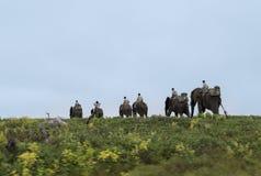 Κίνηση ελεφάντων από τα rangers Στοκ Εικόνα