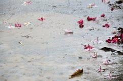 Κίνηση της βροχής με την πτώση λουλουδιών Frangipani και Plumeria σε GR Στοκ φωτογραφία με δικαίωμα ελεύθερης χρήσης
