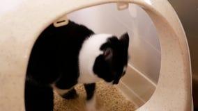 Κίνηση της τιγρέ γάτας που χρησιμοποιεί το κλειστό κιβώτιο απορριμάτων στο σπίτι φιλμ μικρού μήκους
