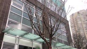 Κίνηση της χιονίζοντας χειμερινής ημέρας με το κενό δέντρο φύλλων απόθεμα βίντεο
