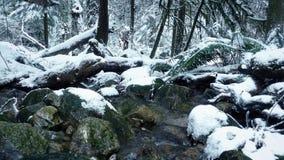 Κίνηση του προηγούμενου ποταμού στο χιονώδες δάσος φιλμ μικρού μήκους