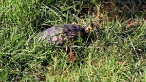 Κίνηση χελωνών απόθεμα βίντεο