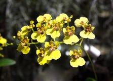 Κίτρινα άνθη Στοκ Εικόνες