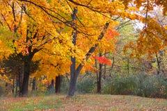 κίτρινα δέντρα στο χρόνο φθινοπώρου στοκ φωτογραφία με δικαίωμα ελεύθερης χρήσης