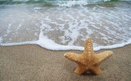 Κίτρινα αστέρι και κύμα θάλασσας Στοκ Εικόνα
