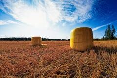 Κίτρινα δέματα στους πρόωρους τομείς φθινοπώρου στοκ φωτογραφίες με δικαίωμα ελεύθερης χρήσης