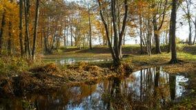 Κίτρινα δέντρα που απεικονίζονται στο νερό φιλμ μικρού μήκους
