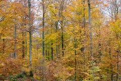 Κίτρινα δέντρα το Νοέμβριο Στοκ Φωτογραφία