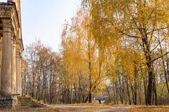 Κίτρινα δέντρα φθινοπώρου Στοκ Εικόνες