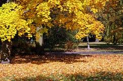 Κίτρινα ηλιόλουστα φύλλα φθινοπώρου Στοκ φωτογραφία με δικαίωμα ελεύθερης χρήσης
