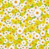 Κίτρινα και άσπρα λουλούδια μαργαριτών απεικόνιση αποθεμάτων