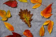 Κίτρινα και κόκκινα φύλλα φθινοπώρου στοκ φωτογραφίες με δικαίωμα ελεύθερης χρήσης