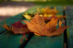 Κίτρινα και κόκκινα φύλλα σε έναν πάγκο Στοκ φωτογραφία με δικαίωμα ελεύθερης χρήσης