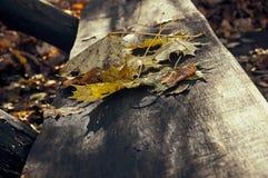 Κίτρινα και κόκκινα φύλλα σε έναν πάγκο Στοκ Φωτογραφίες