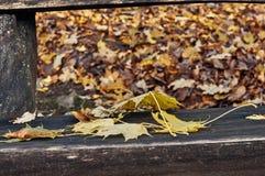 Κίτρινα και κόκκινα φύλλα σε έναν πάγκο Στοκ Φωτογραφία