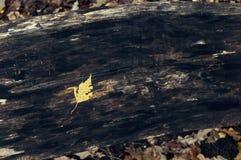 Κίτρινα και κόκκινα φύλλα σε έναν πάγκο Στοκ φωτογραφίες με δικαίωμα ελεύθερης χρήσης