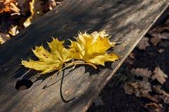 Κίτρινα και κόκκινα φύλλα σε έναν πάγκο Στοκ εικόνες με δικαίωμα ελεύθερης χρήσης