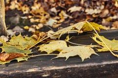 Κίτρινα και κόκκινα φύλλα σε έναν πάγκο Στοκ Εικόνες