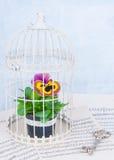 Λουλούδι στο κλουβί Στοκ εικόνες με δικαίωμα ελεύθερης χρήσης