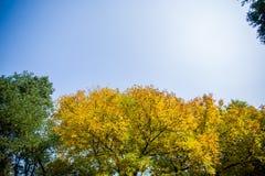 Κίτρινα και πράσινα φύλλα στοκ εικόνα