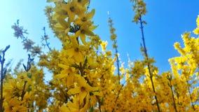 Κίτρινα κεφάλια λουλουδιών Στοκ Εικόνες