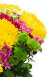 Κίτρινα, κόκκινα και ρόδινα λουλούδια mum Στοκ Φωτογραφίες