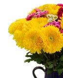 Κίτρινα, κόκκινα και ρόδινα λουλούδια mum Στοκ φωτογραφίες με δικαίωμα ελεύθερης χρήσης