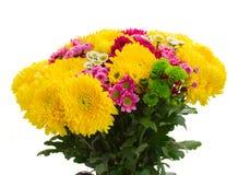 Κίτρινα, κόκκινα και ρόδινα λουλούδια mum Στοκ Εικόνα