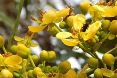 Κίτρινα λουλούδια με τη μικρή μέλισσα Στοκ εικόνα με δικαίωμα ελεύθερης χρήσης