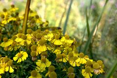 Κίτρινα λουλούδια σε έναν κήπο Στοκ εικόνα με δικαίωμα ελεύθερης χρήσης