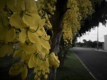 Κίτρινα λουλούδια σε ένα δέντρο στοκ φωτογραφίες